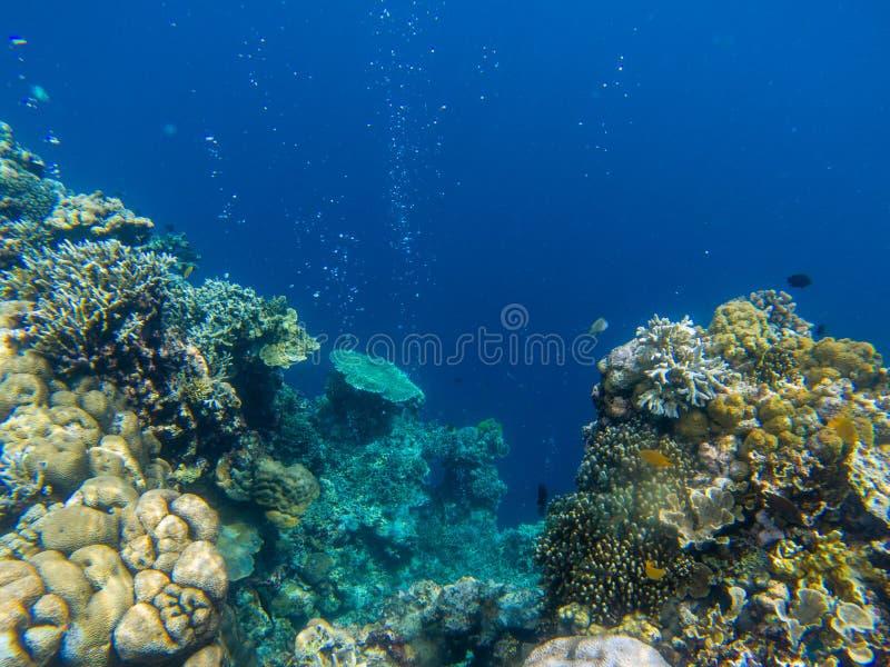 Paysage sous-marin avec les poissons tropicaux et le récif coralien Mur de corail et abîme bleu profond Animal marin en nature sa image stock