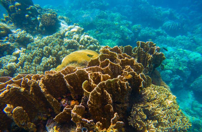 Paysage sous-marin avec les poissons tropicaux Scène de récif coralien pour le fond d'aquarium ou la bannière naviguante au schno photographie stock