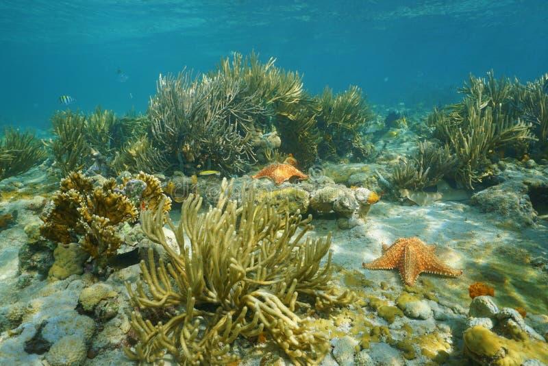 Paysage sous-marin dans un récif coralien avec des étoiles de mer image libre de droits