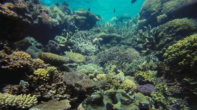 Paysage sous-marin de panorama de récif coralien du monde images stock