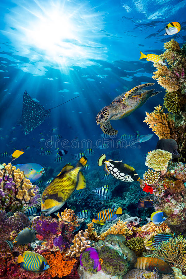 Paysage sous-marin de récif coralien photographie stock libre de droits