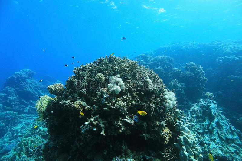 Paysage sous-marin en mer chaude photographie stock