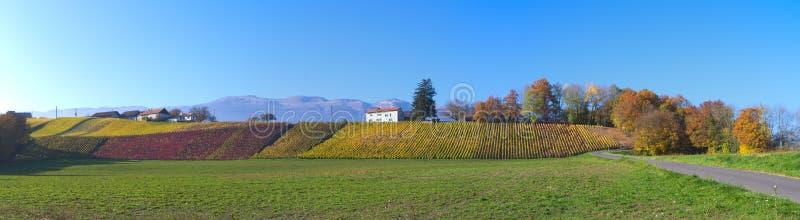 Paysage suisse de vignoble photo stock