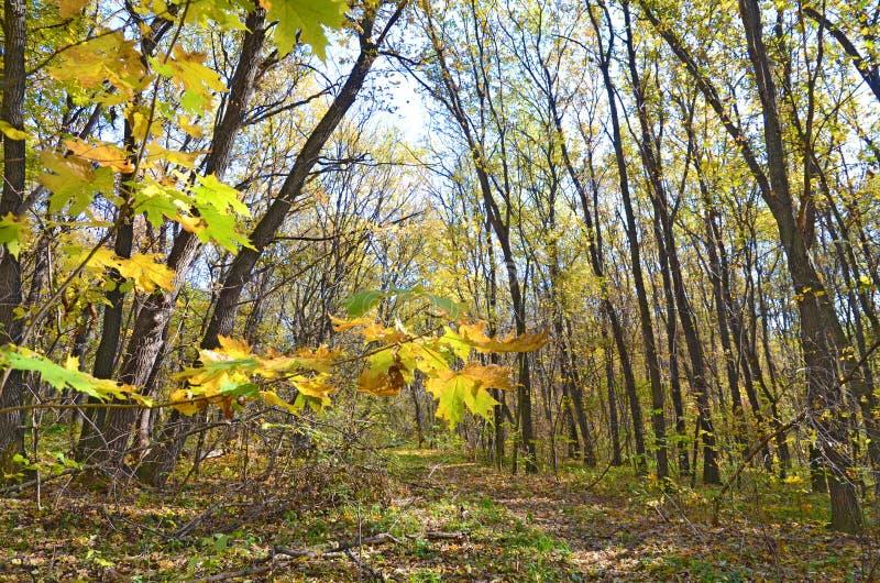 Paysage sur la route abandonnée dans la forêt sauvage en automne image libre de droits