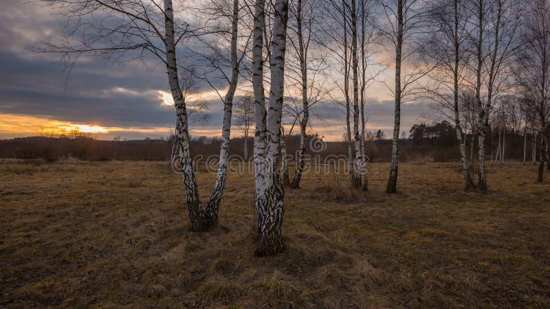 Paysage tôt de forêt de ressort photographie stock