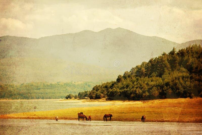 Paysage texturisé de cheval images libres de droits
