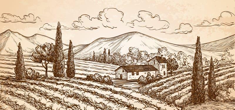 Paysage tiré par la main de vignoble