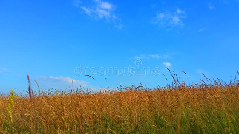 Paysage tranquille photographie stock libre de droits