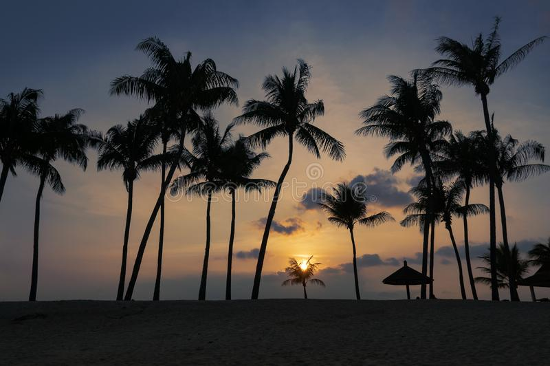 Paysage tropical de coucher du soleil de plage avec des silhouettes de palmiers photographie stock