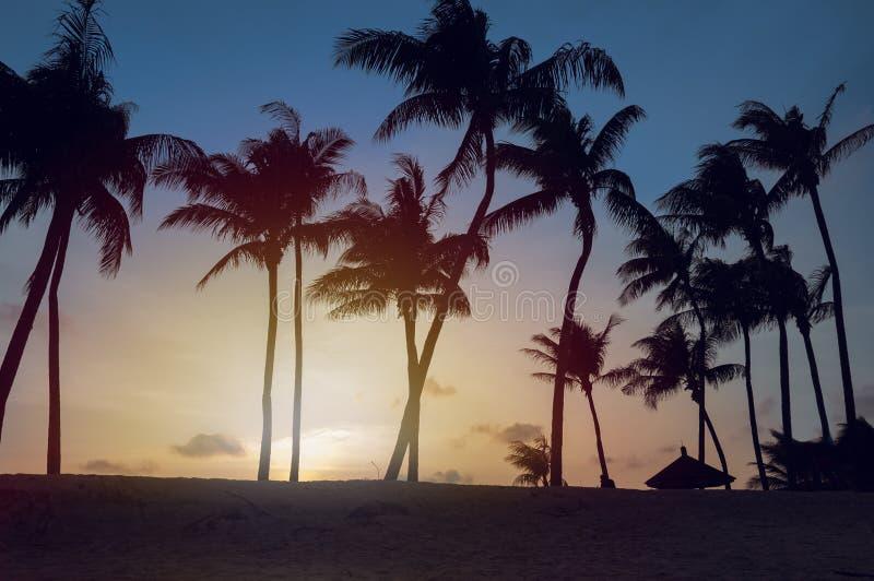 Paysage tropical de coucher du soleil de plage avec des silhouettes de palmiers photographie stock libre de droits