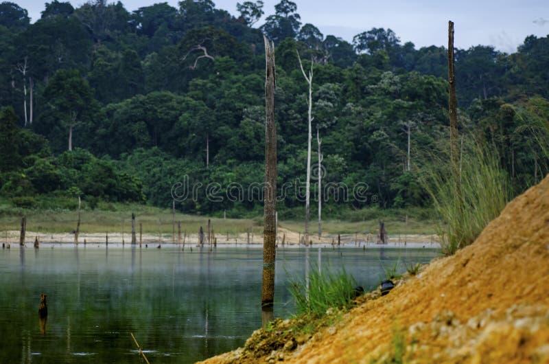 Paysage tropical de forêt tropicale du parc d'état royal de Belum situé dans Perak, Malaisie photo libre de droits