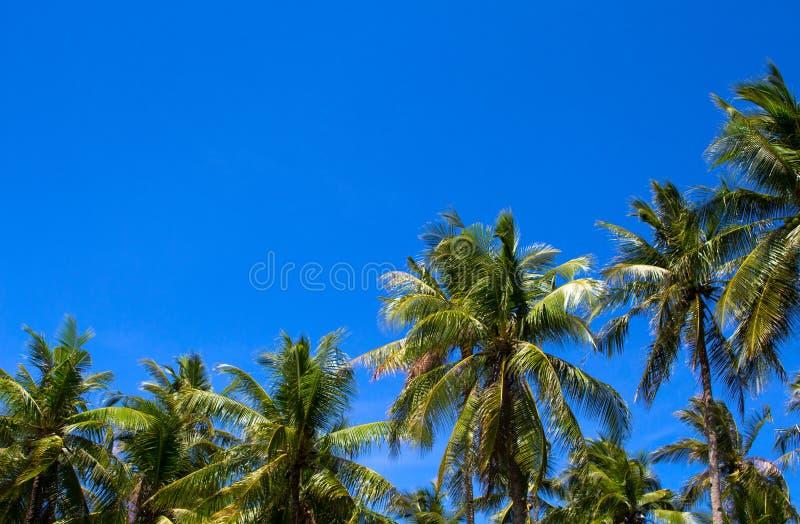 Paysage tropical ensoleillé avec des palmiers de Cocos Silhouette tropicale de palmiers au-dessus de ciel photo libre de droits