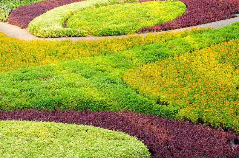 Paysage tropical et fleur de bel arbre de plantes ornementales images stock