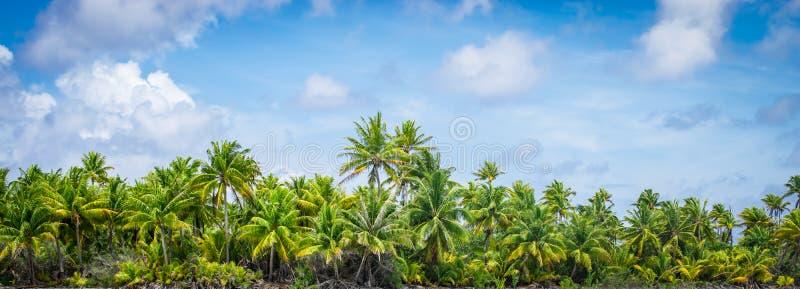 Paysage tropical panoramique de palmier photos stock