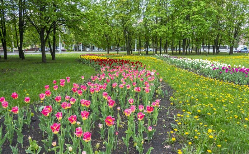 Paysage urbain avec des tulipes et des arbres contre un ciel bleu avec des nuages images libres de droits