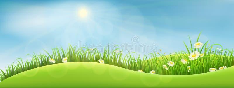 Paysage vert d'été illustration stock