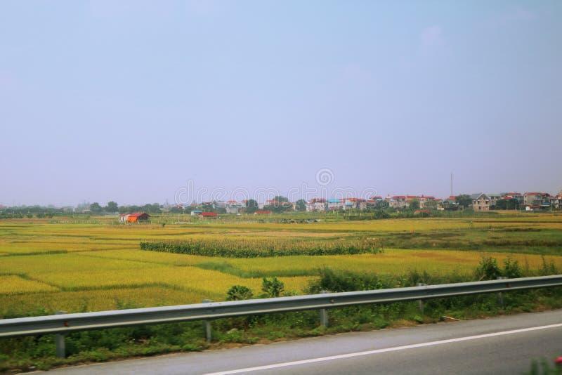 Paysage vert dans Sapa, Vietnam image libre de droits
