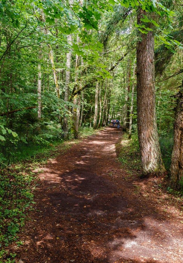 Paysage vert de forêt avec le chemin brun image libre de droits
