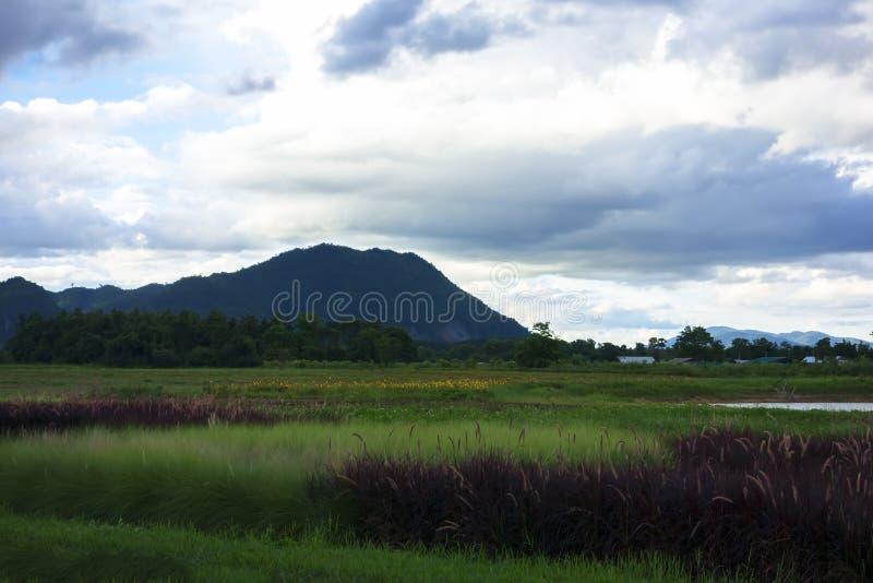 Paysage vert rouge près de rivière de Mekok photographie stock