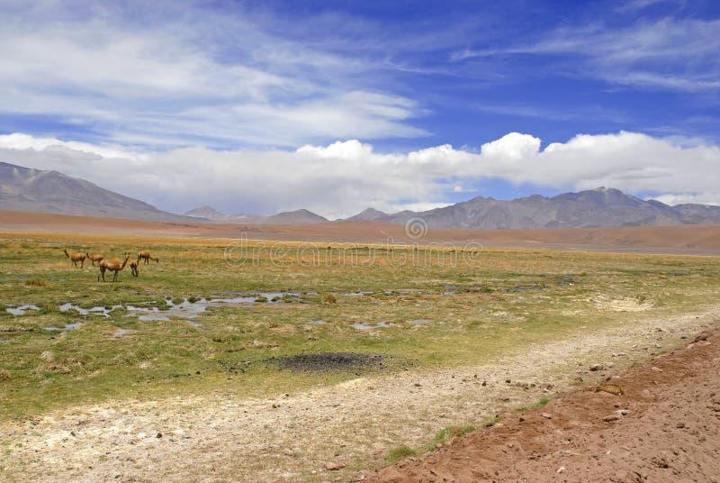 Paysage volcanique spartiate du désert d'Atacama images stock