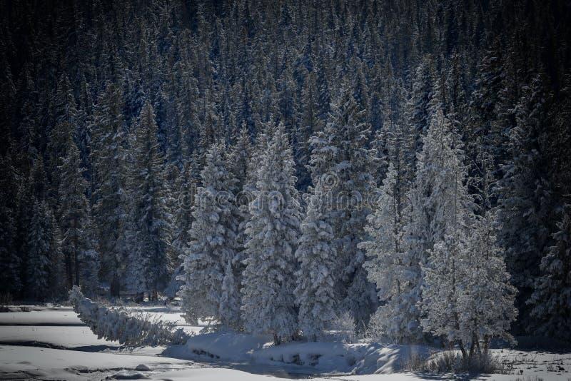 Paysage Yellowstone d'hiver image libre de droits