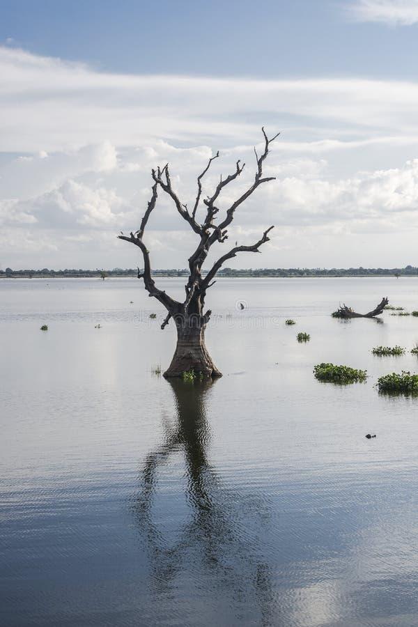 Paysages avec l'arbre sec dans le lac photographie stock libre de droits