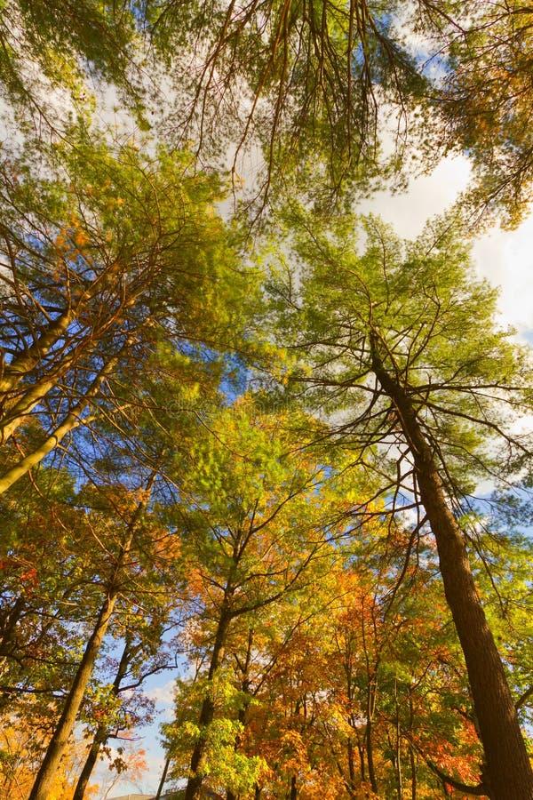 Paysages colorés de paysage de chute image stock