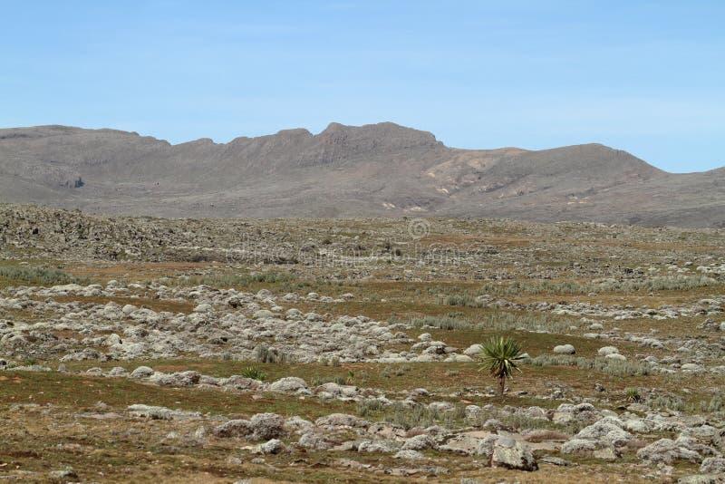 Paysages dans les montagnes de balle de parc national en Ethiopie photo libre de droits