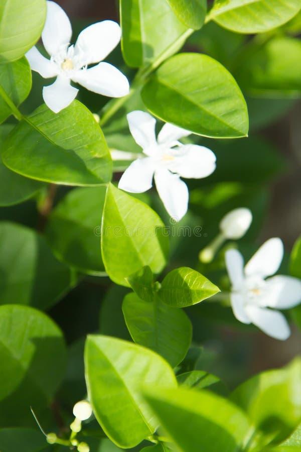 Paysages extérieurs verts de feuille et d'arbre photographie stock