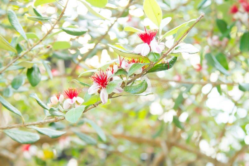 Paysages ext?rieurs verts de feuille et d'arbre image libre de droits