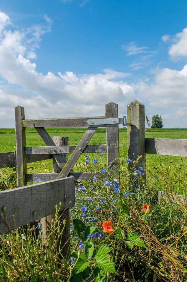 Paysages néerlandais - Baarn - Utrecht photographie stock libre de droits