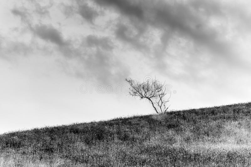 Paysages scéniques de collines de Wither photographie stock libre de droits