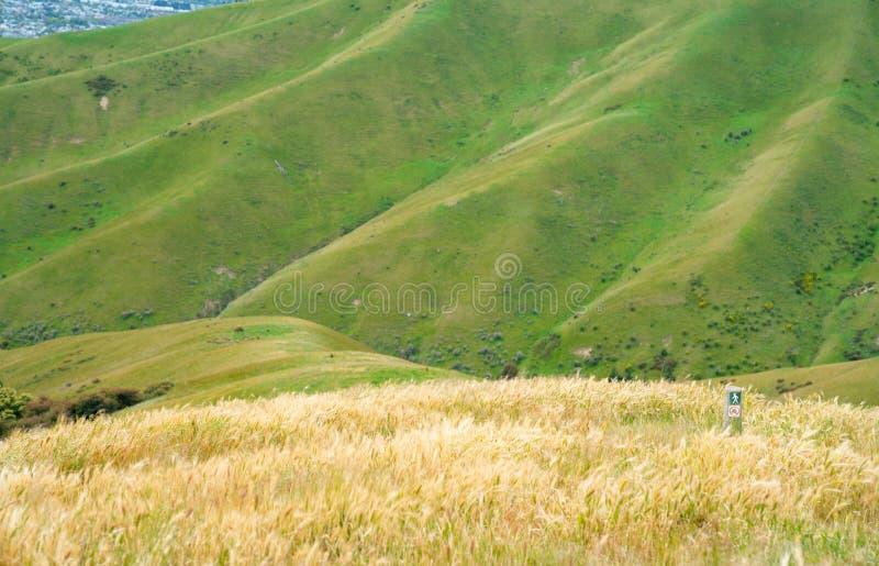 Paysages scéniques de collines de Wither photo stock