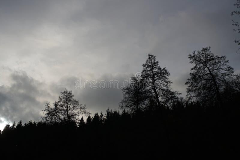 Paysages sombres avec les arbres foncés photographiés un après-midi orageux sombre d'hiver en Allemagne image stock
