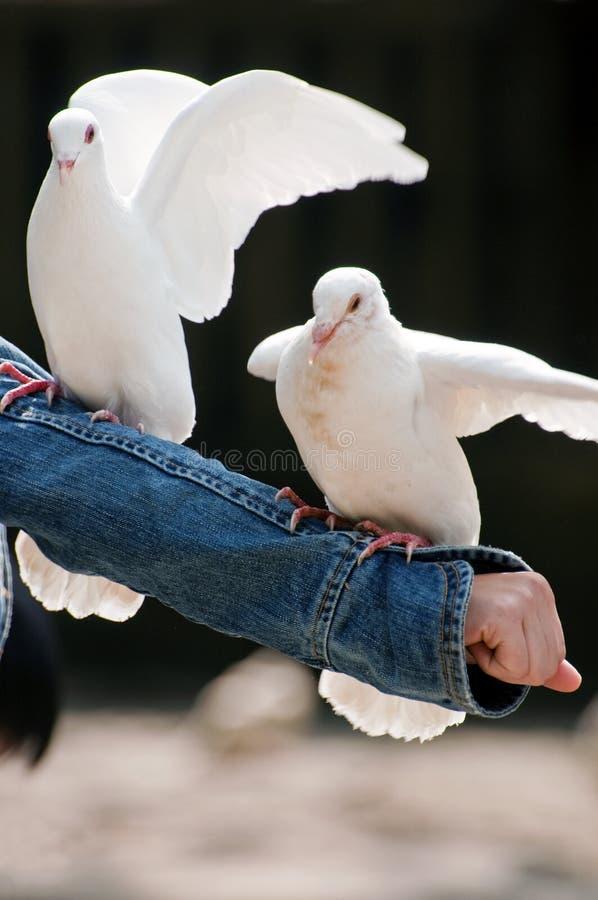 Paz foto de archivo libre de regalías