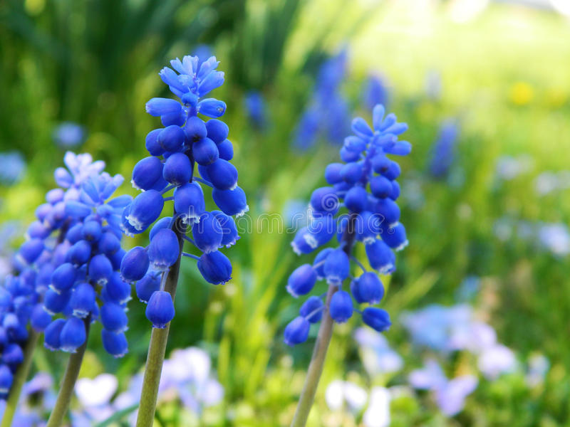 Download Paz azul foto de archivo. Imagen de flores, extracto - 41914156