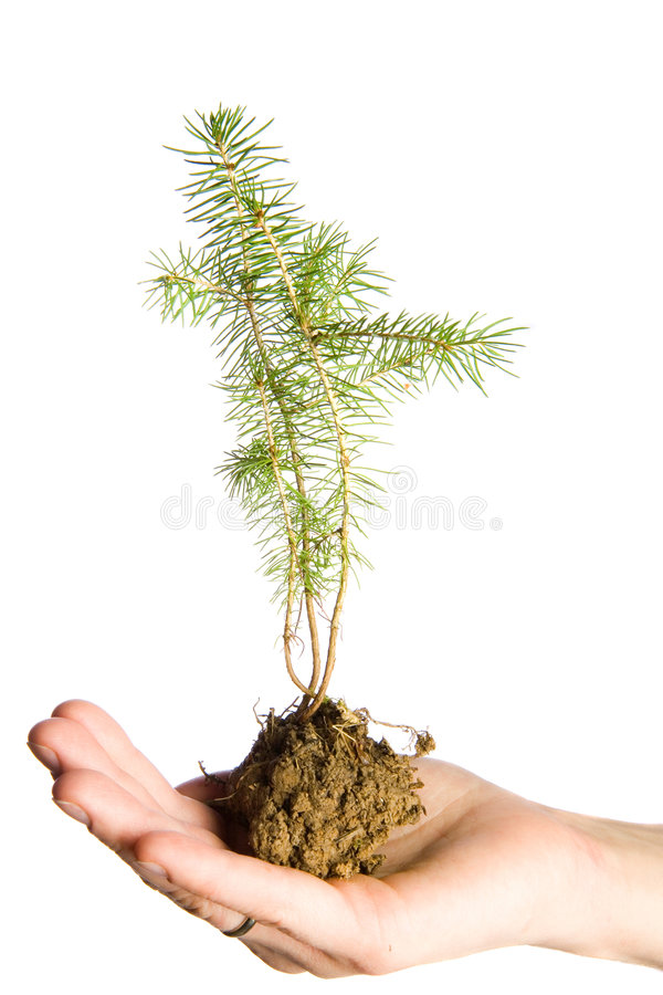 Paz da natureza nas mãos imagem de stock royalty free