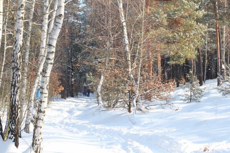 Paz e quieto dos vidoeiros e os pinhos, a casa e a estrada na floresta coberto de neve do inverno fotos de stock royalty free