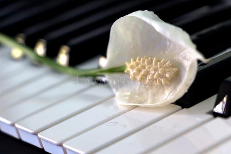 Paz Lily Flower no teclado imagens de stock royalty free