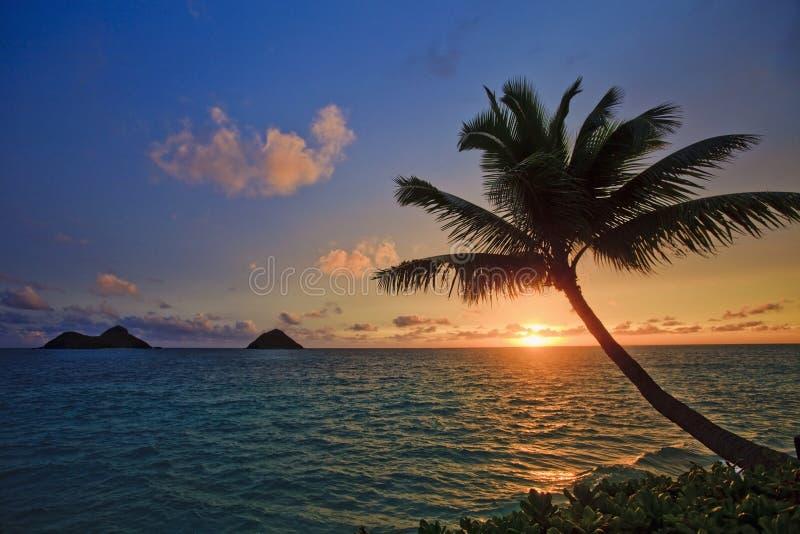 Pazifischer Sonnenaufgang mit Palme stockfotos