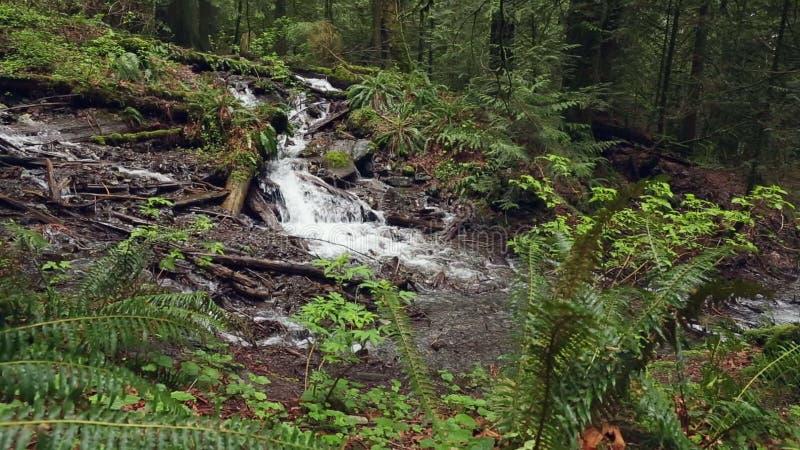 Pazifisches Nordwestregenwald-und Stoff-Unterholz stock video