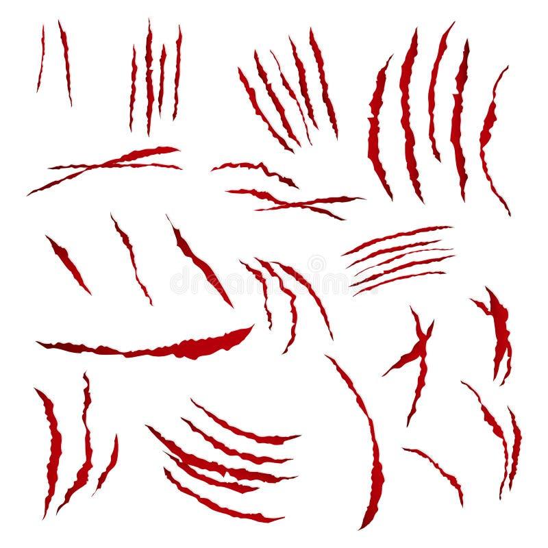 Pazurów narysy Wektorowi pojedynczy białe tło Niedźwiadkowy Lub Tygrysi łapa pazura narys Krwisty papier strzępiący royalty ilustracja