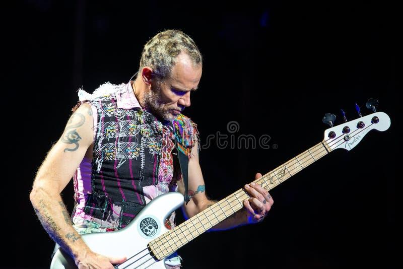 Pchła, basowej gitary Red Hot Chili Peppers muzyczny zespół gracz, wykonuje w koncercie przy kłamstewko festiwalem zdjęcia royalty free