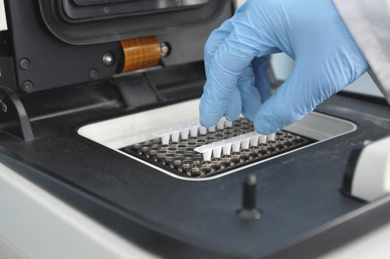PCR czas rzeczywisty obrazy royalty free
