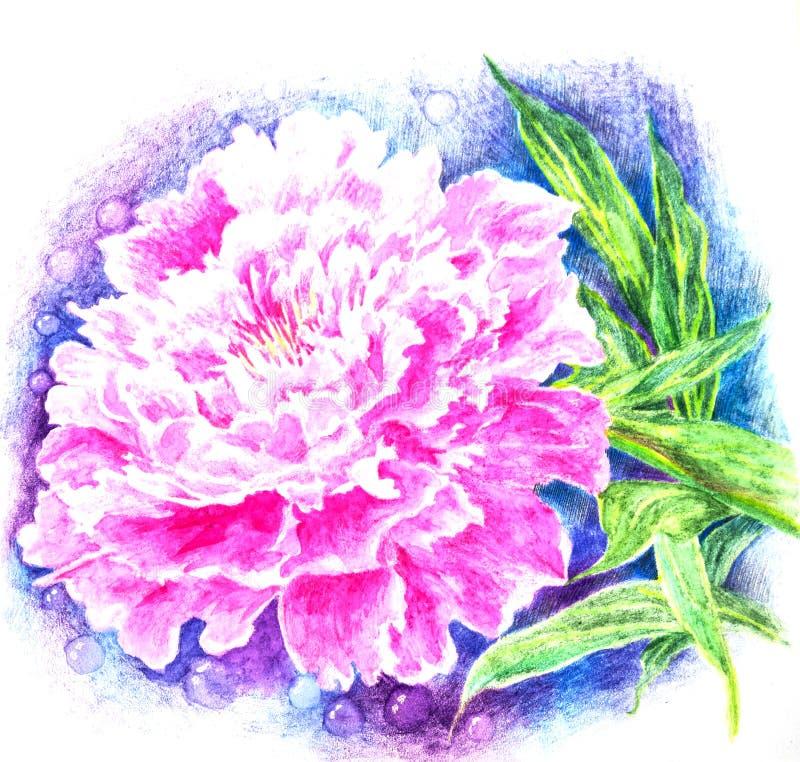 A peônia cor-de-rosa revela as pétalas perfumadas ilustração do vetor