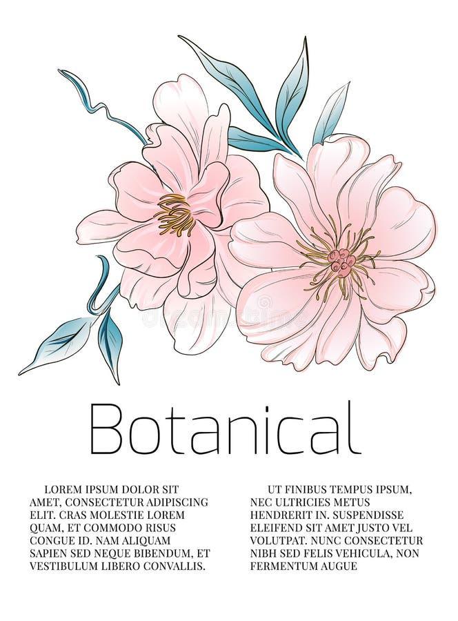 A peônia da aquarela floresce o cartão botânico Ilustração floral do cartão de casamento Fundo bonito tirado mão da arte ilustração do vetor