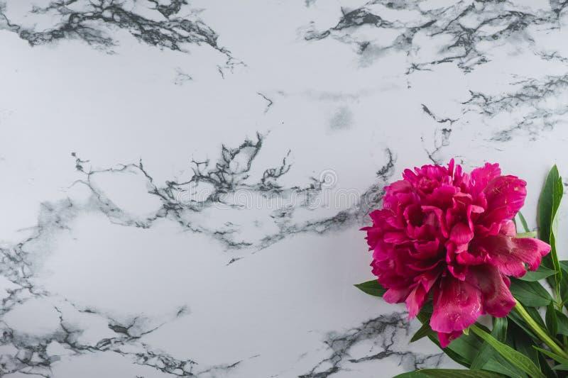 Peônia de Borgonha em um fundo de mármore Fundo da foto imagem de stock