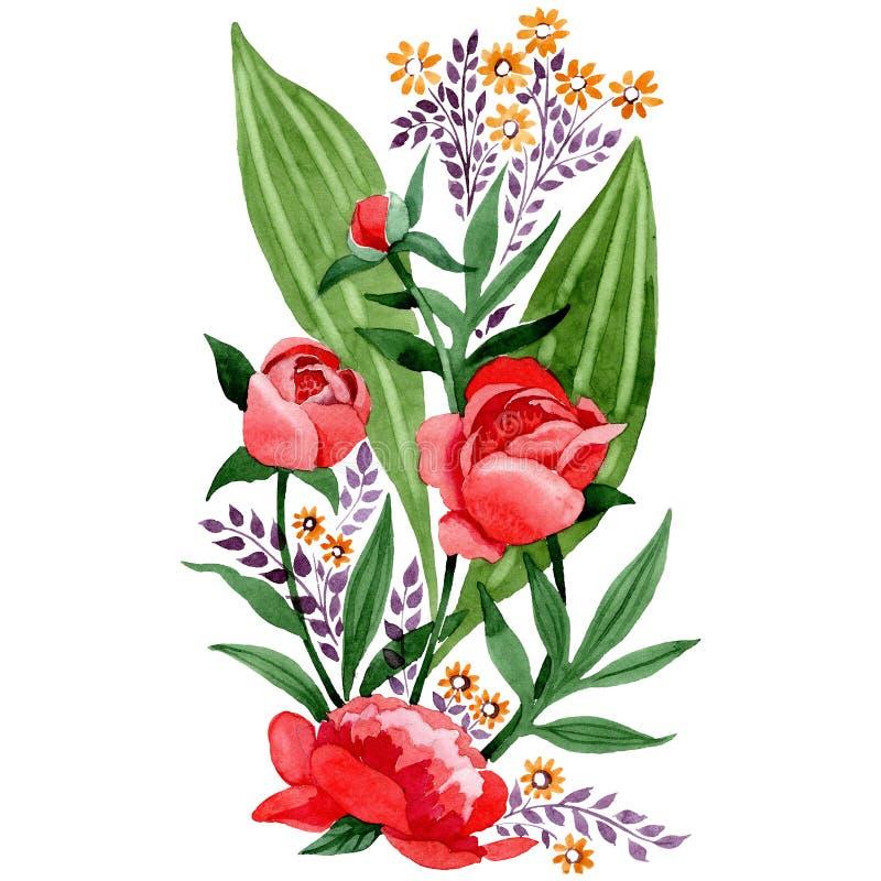 Peônia vermelha e flores botânicas cor-de-rosa Grupo da ilustração do fundo da aquarela Elemento isolado da ilustração do ornamen ilustração royalty free