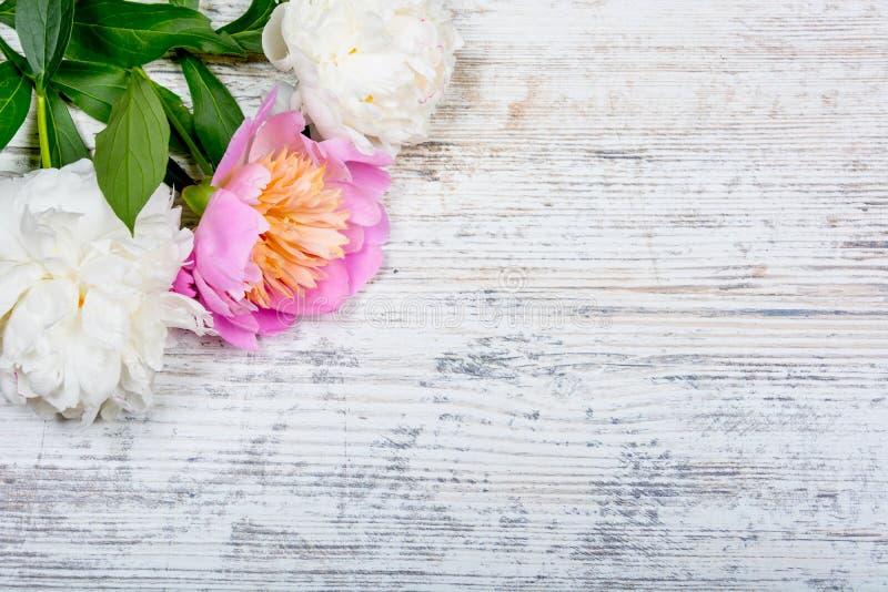 Peônias brancas e cor-de-rosa em uma placa de madeira textured para anunciar, local do vintage velho Configuração lisa imagens de stock royalty free