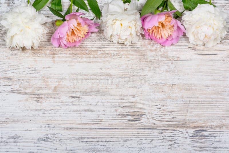 Peônias brancas e cor-de-rosa em uma placa de madeira textured para anunciar, local do vintage velho Configuração lisa, copyspace fotos de stock